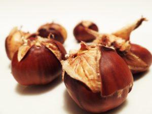 chestnut-498833_1920